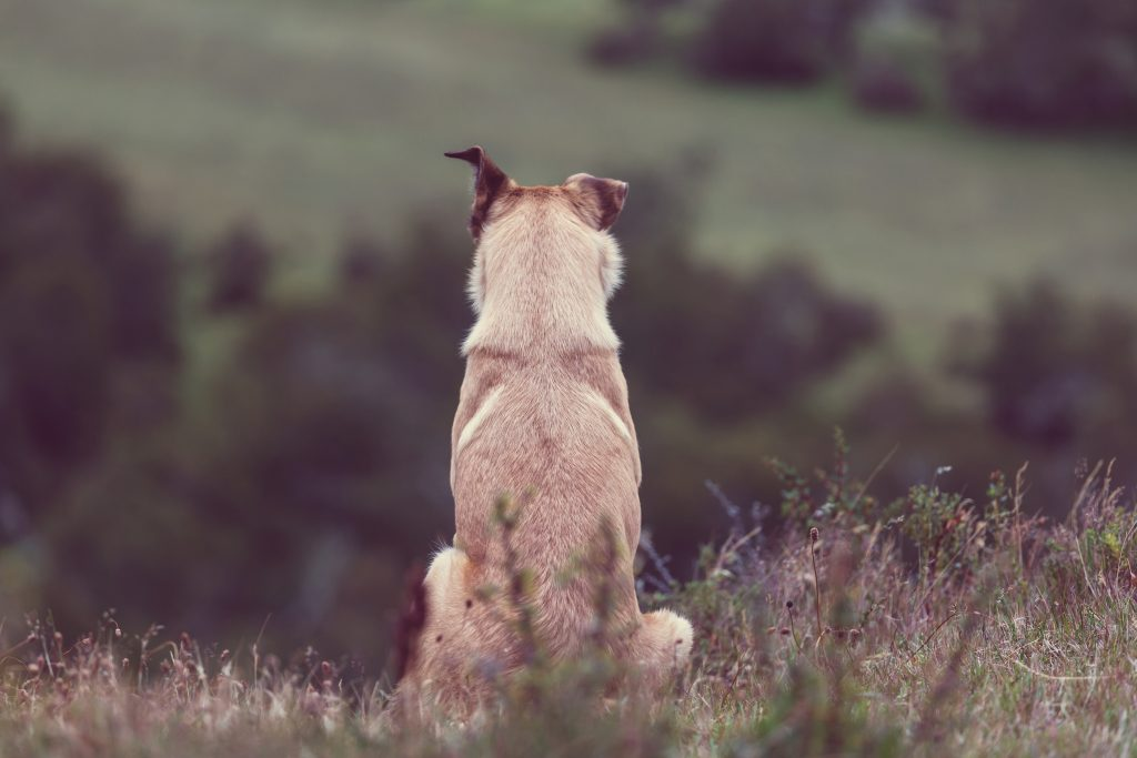 What is CBD oil and how does it work in dogs